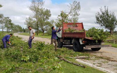 Limpieza y poda de árboles